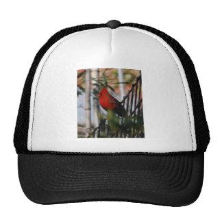 cardinal gorros