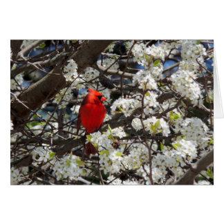 Cardinal Greeting Card Greeting Card