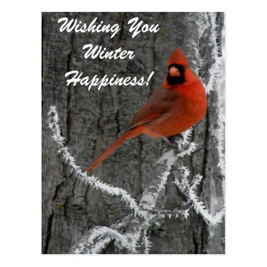 Cardinal Greetings Postcard