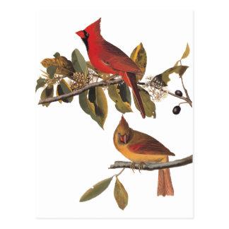 Cardinal Grosbeak Audubon Vintage Bird Bookplate Postcard