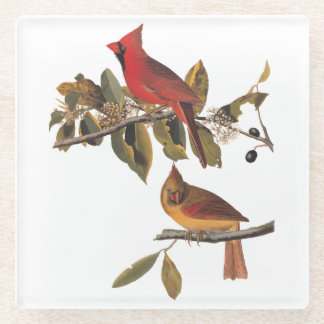 Cardinal Grosbeak Bird Pair Audubon Vintage Art Glass Coaster