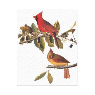 Cardinal Grosbeak Birds Audubon Vintage Art Canvas Print