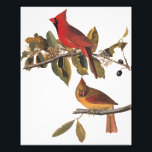 "Cardinal Grosbeak Birds Audubon Vintage Art Photo Print<br><div class=""desc"">This male and female pair of cardinals is perched on a flowering wild almond branch. The male is a rich red with a black mask and the female is more camouflaged with red markings. This vintage art is bookplate 159 of John James Audubon&#39;s Birds of America series. The perfect print...</div>"