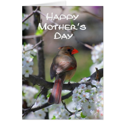 Cardinal Happy Mother's Day Card
