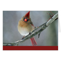 Cardinal Holiday Card