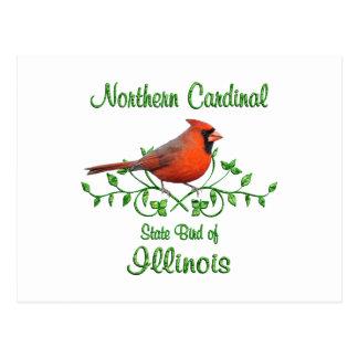 Cardinal Illinois Bird Postcard