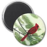 Cardinal - imán