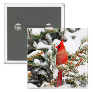 Cardinal in a pine tree pinback button