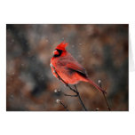Cardinal in a Snowstorm Note Card