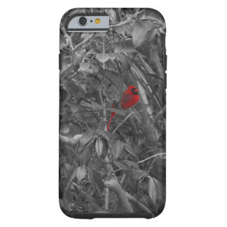 Cardinal in a Tree Case iPhone 6 Case
