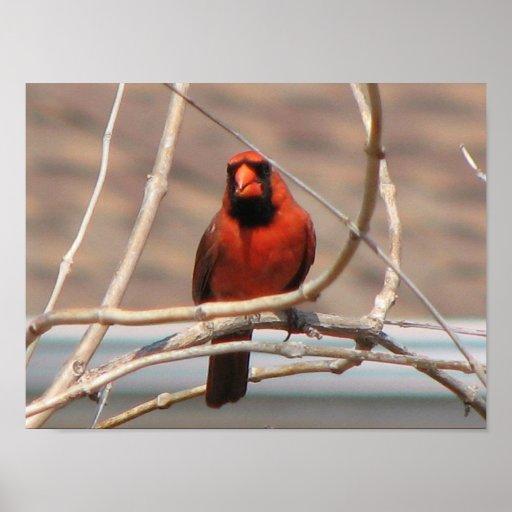 Cardinal in a Tree! Print