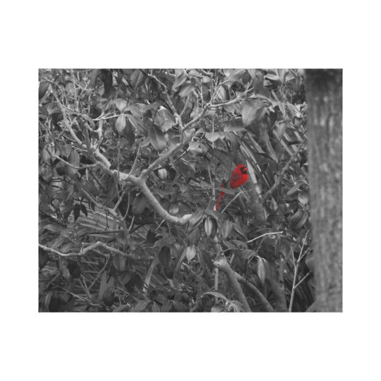 Cardinal in a Tree Stretched Canvas Print