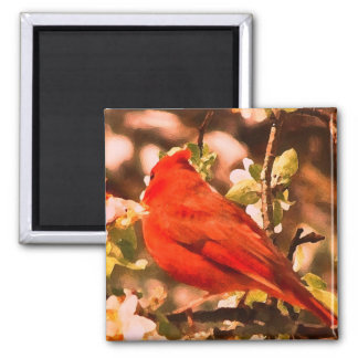 Cardinal in Apple Blossoms Magnets