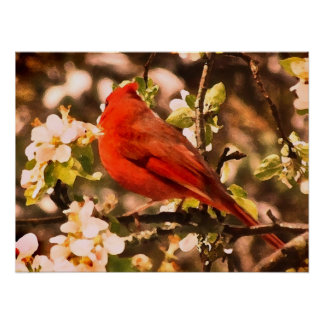 Cardinal in Apple Blossoms Poster