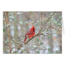 Cardinal in bush card