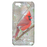 Cardinal in bush case for iPhone 5C