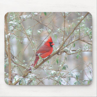 Cardinal in bush mouse pad