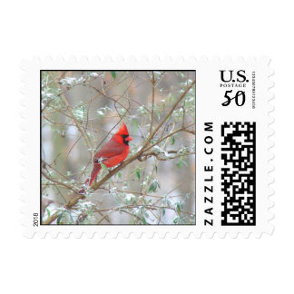 Cardinal in bush postage