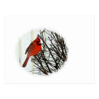 Cardinal in Bush Postcard