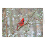 Cardinal in bush stationery note card
