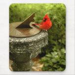 Cardinal in Central Park Mousepad Mousepads