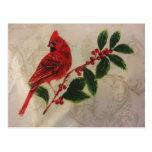 Cardinal in Holly Bush Postcard
