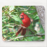 Cardinal in Holly Mouse Pad