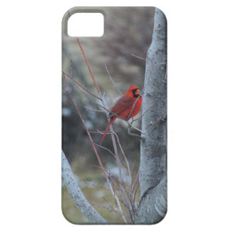 Cardinal in Maple Tree iPhone case-choices iPhone SE/5/5s Case