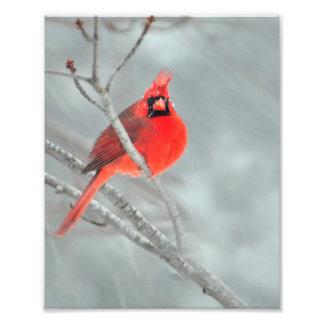 "Cardinal in Snow 8"" x 10"" Photo Print"