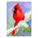 Cardinal in Snow Cards