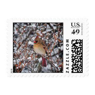 Cardinal in snow Christmas Postage - Square