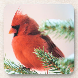 Cardinal in Snow Dusted Fir Coaster