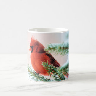 Cardinal in Snow Dusted Fir Coffee Mug