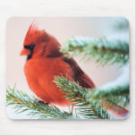 Cardinal in Snow Dusted Fir Mouse Pads