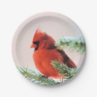 Cardinal in Snow Dusted Fir Tree Paper Plate