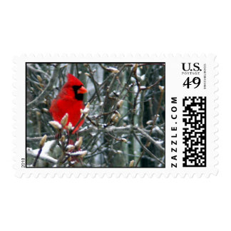 Cardinal in Snow Postage Stamp
