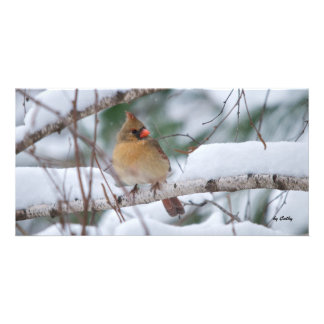 Cardinal in Snow Storm Picture Card