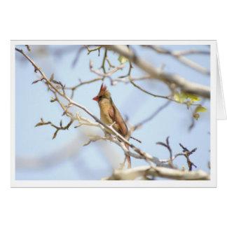 Cardinal In spring Greeting Card