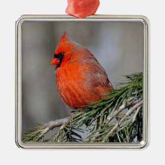 Cardinal in Spruce Tree Metal Ornament