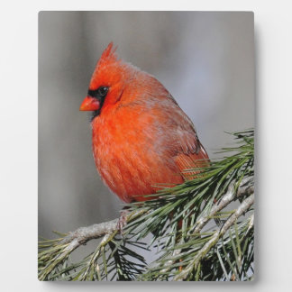 Cardinal in Spruce Tree Display Plaque