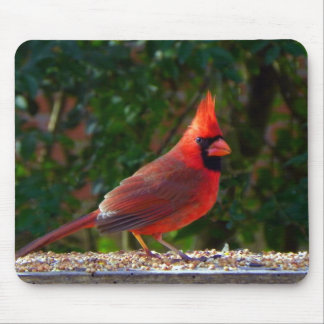 Cardinal in Sunlight Mouse Pad