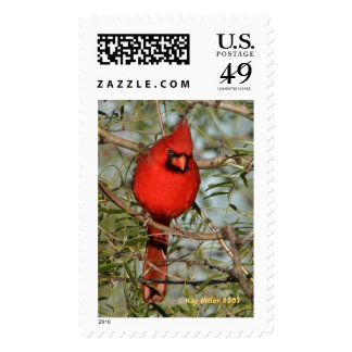 Cardinal in the Cold Postage Stamp