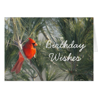 Cardinal in the Pine-customize any occasion Greeting Card