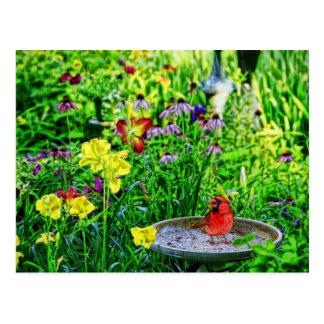 Cardinal in the Rain Postcard