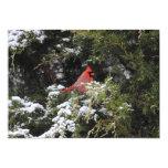 "Cardinal in the Snow 1 5"" X 7"" Invitation Card"