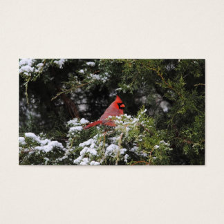 Cardinal in the Snow 1 Business Card