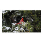 Cardinal in the Snow 1 Business Card Template