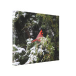 Cardinal in the Snow 1 Canvas Print