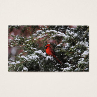 Cardinal in the Snow 2 Business Card