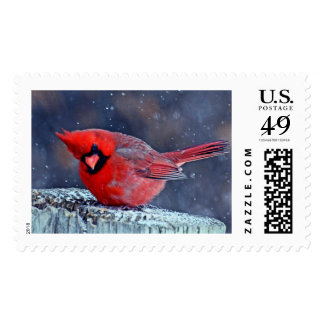 Cardinal in the snow. postage stamp